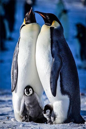 دانلود زیرنویس مستند 2015 Snow Chick: A Penguin's Tale