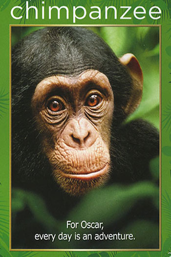 Chimpanzee 2012