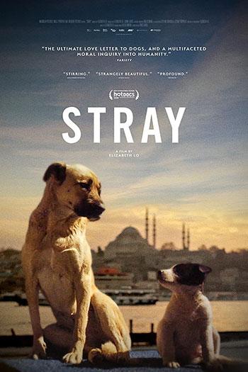 دانلود زیرنویس مستند Stray 2020